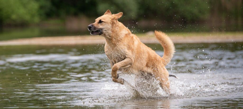 Badeseen mit Hund